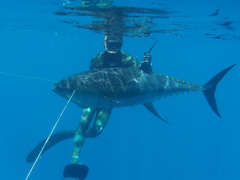 spearfishing-panama-fish