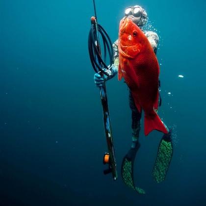 Spearfishing Panama - Morro Negrito